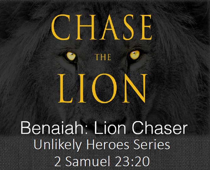 Chase the Lion2